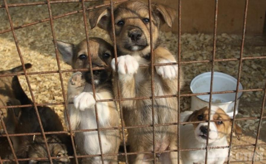 В Сызрани работает гицель: отлов безнадзорных животных проводят дважды в неделю